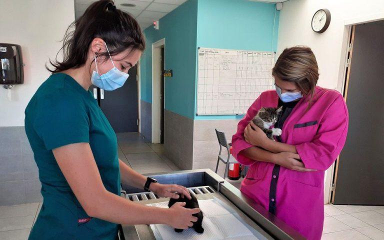 De ce atrage România din ce în ce mai mulți studenți francezi la medicina veterinară?