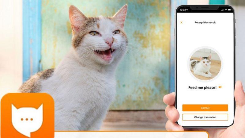 MeowTalk: Aplicația dezvoltatorului Alexa, care poate traduce mieunatul pisicilor