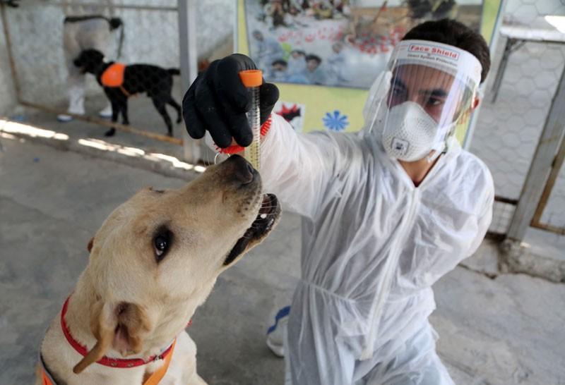 Câinii pot detecta COVID-19? Iată ce spun oamenii de știință