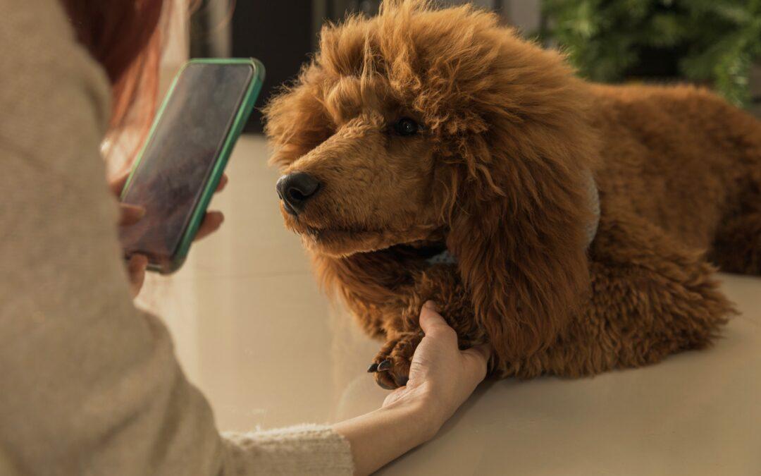 COVID-19 aduce în centrul atenției telemedicina, în îngrijirea veterinară