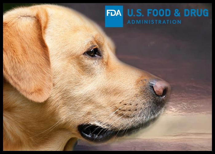 FDA aprobă condiționat prima tabletă orală pentru tratarea limfomului la câini