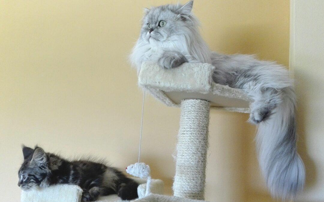 Motivul surprinzător pentru care miaună pisicile