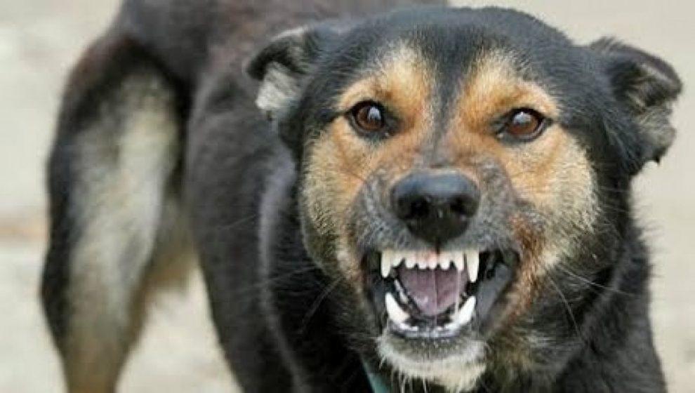 Studiu: Personalitatea proprietarului animalului de companie poate afecta succesul antrenamentului canin