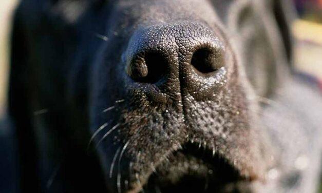 Italia a început un studiu cu câini pentru detectarea COVID-19 prin miros