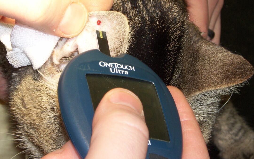Monitorizarea glucozei la pacientul veterinar canin și felin