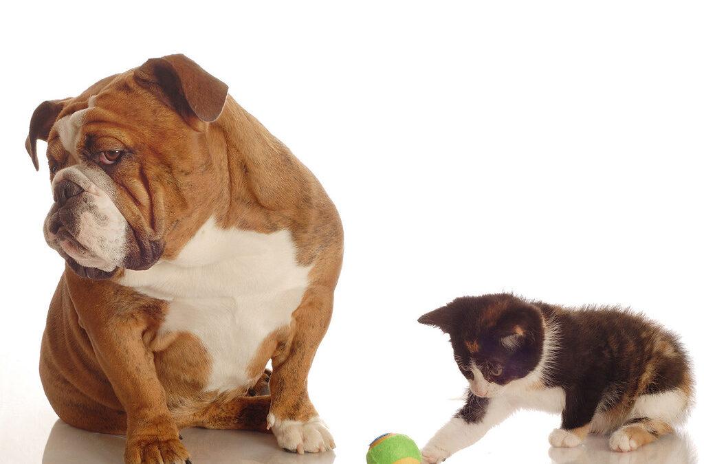 Câini, pisici și COVID