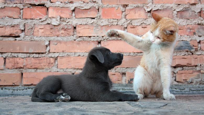 4 octombrie – Ziua internaţională a animalelor