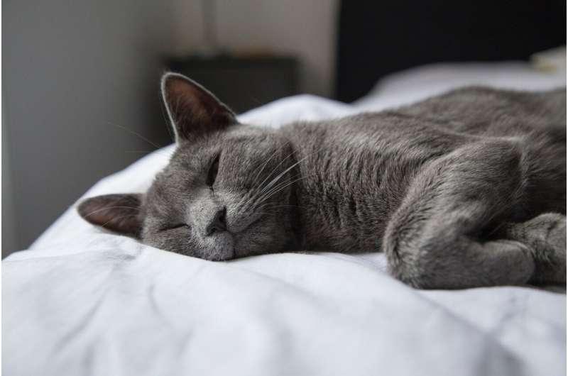 Studiu: Pisicile sunt mai puțin stresate, după adoptarea de către familiile cu copii cu autism